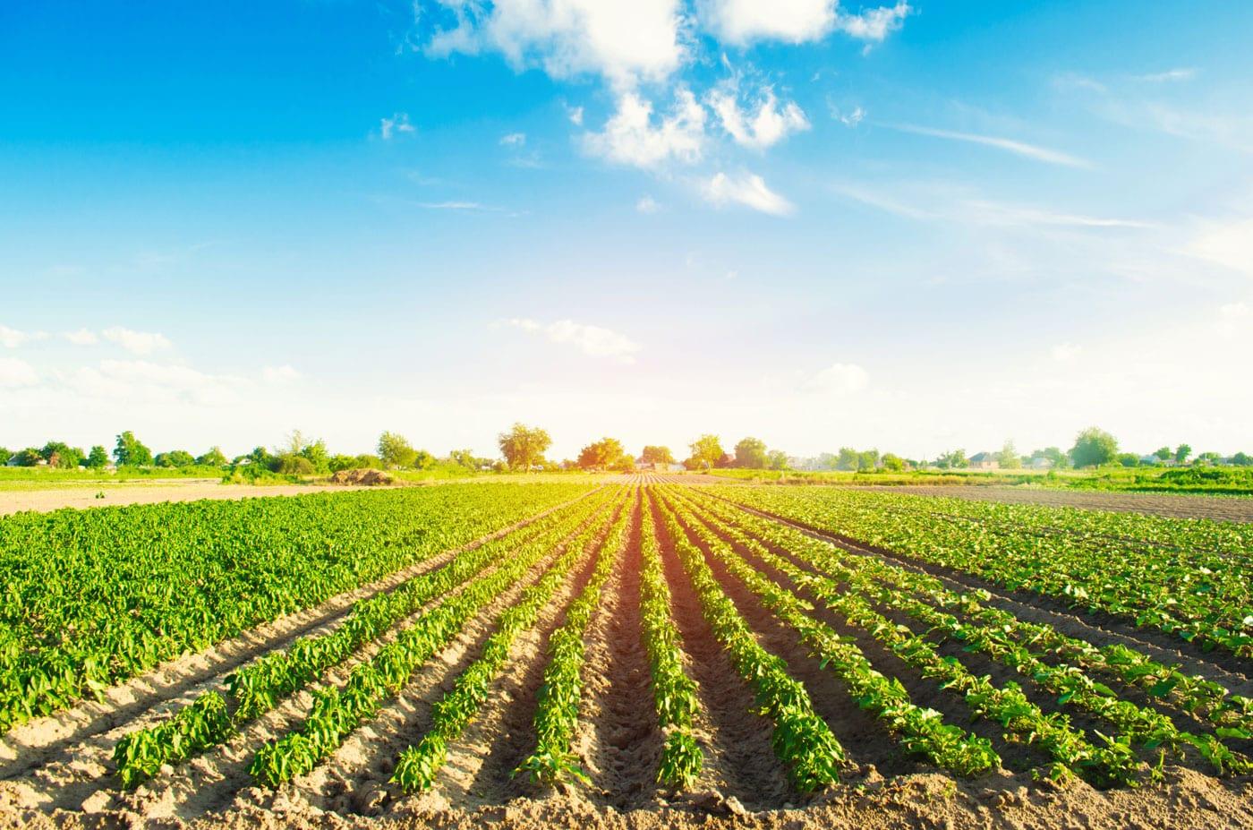 Wie gefährlich ist Nitrat im Wasser wirklich?