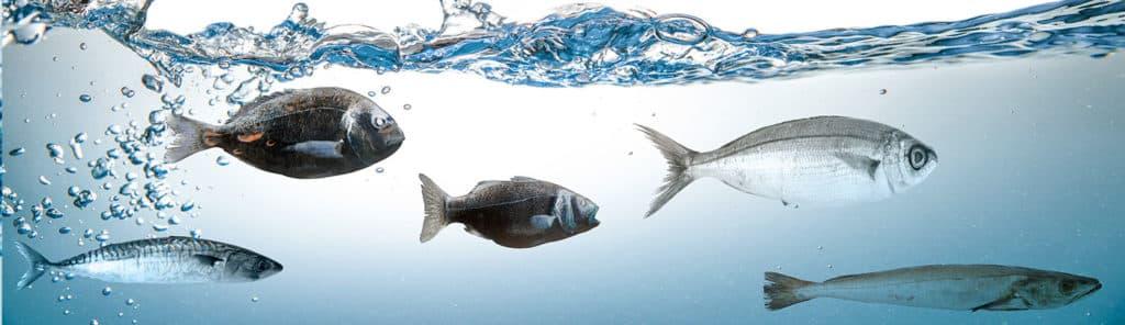 Fische schwimmen in Osmosewasser