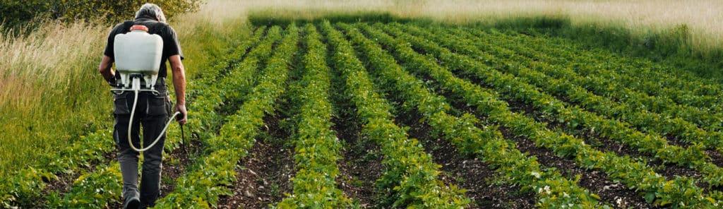 Mann der auf dem Feld arbeitet und Pflanzen düngt, was zu einer hohen Belastung von Nitrat im Wasser beiträgt